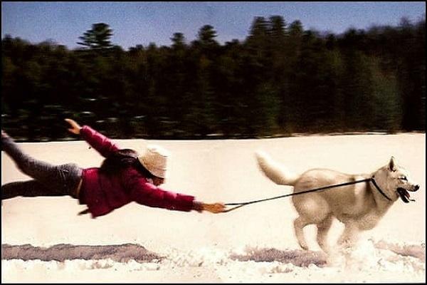 необычный собачий закон