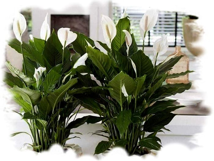 какие растения фильтруют воздух