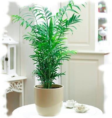 какие растения чистят воздух