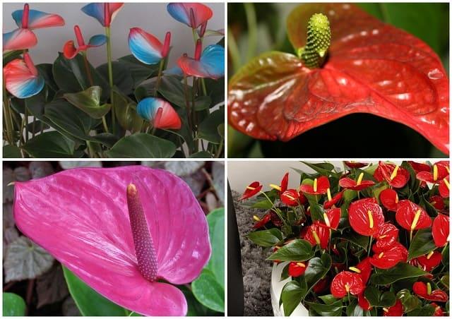 полезные цветы для дома