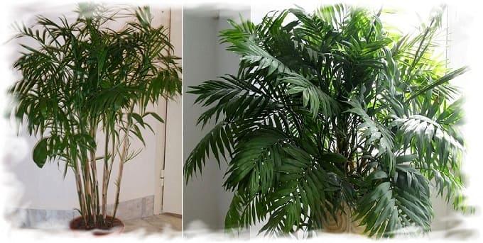 растения и климат в доме