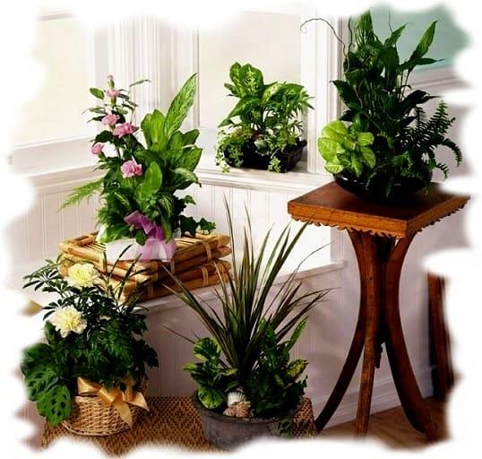 полезные растения в интерьере