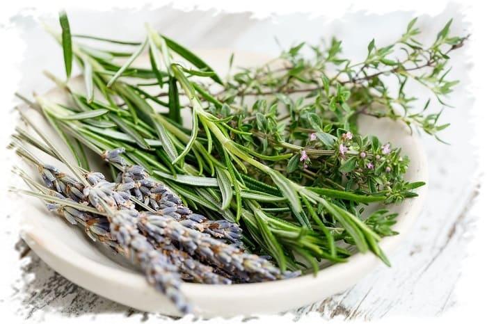 травы, полезные коже