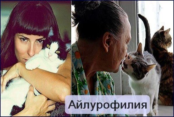 привязанность к кошкам