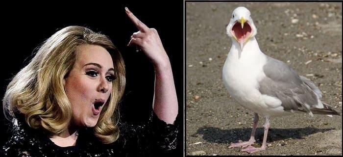 орнитофобия, боязнь птиц, боязнь чаек