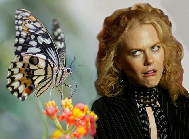 страх насекомых, боязнь бабочек