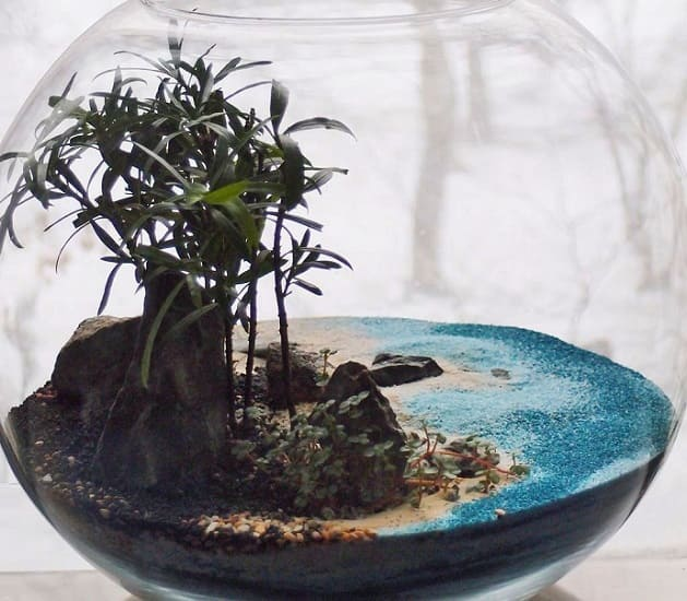 мини-сад в аквариуме