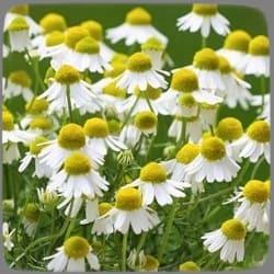 травы для подушки от бессонницы