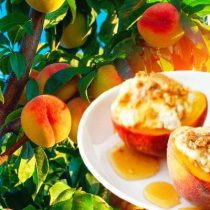 персики на десерт