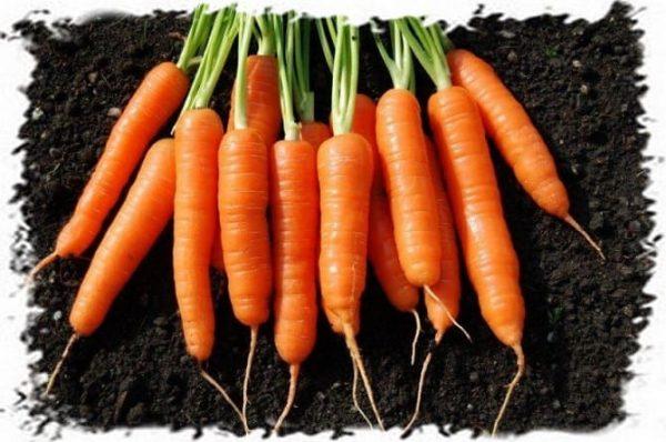 приготовление морковных супов