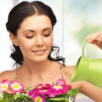 подкормки для домашних цветов