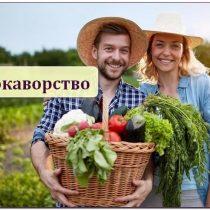 локаворство, урожай овощей