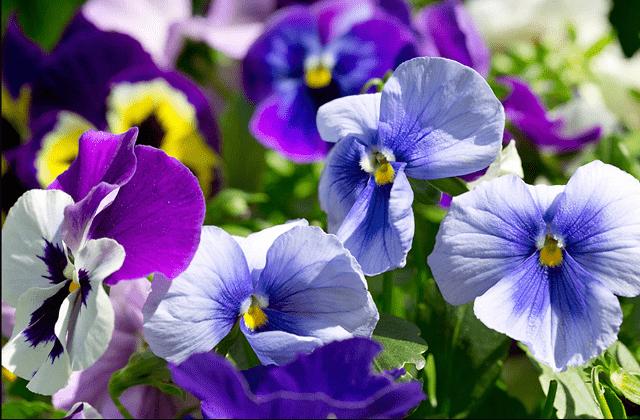 цветы для сушки