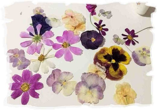 сушеные цветы