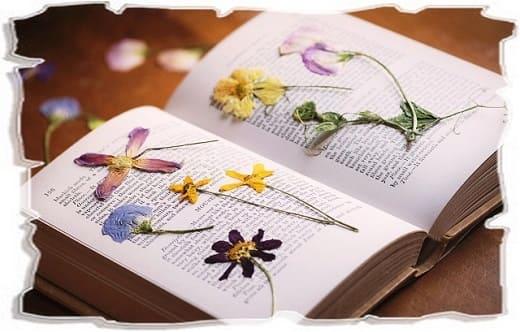 сушка цветов в книге
